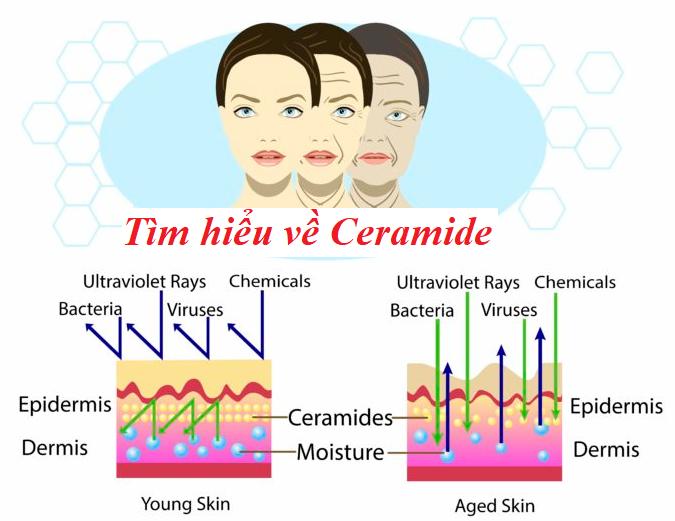 tìm hiểu công dụng và cách sử dụng Ceramide